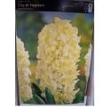 Hyakinthus orientalis