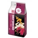 Durpeta: Orchid