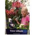 Tree Lilium